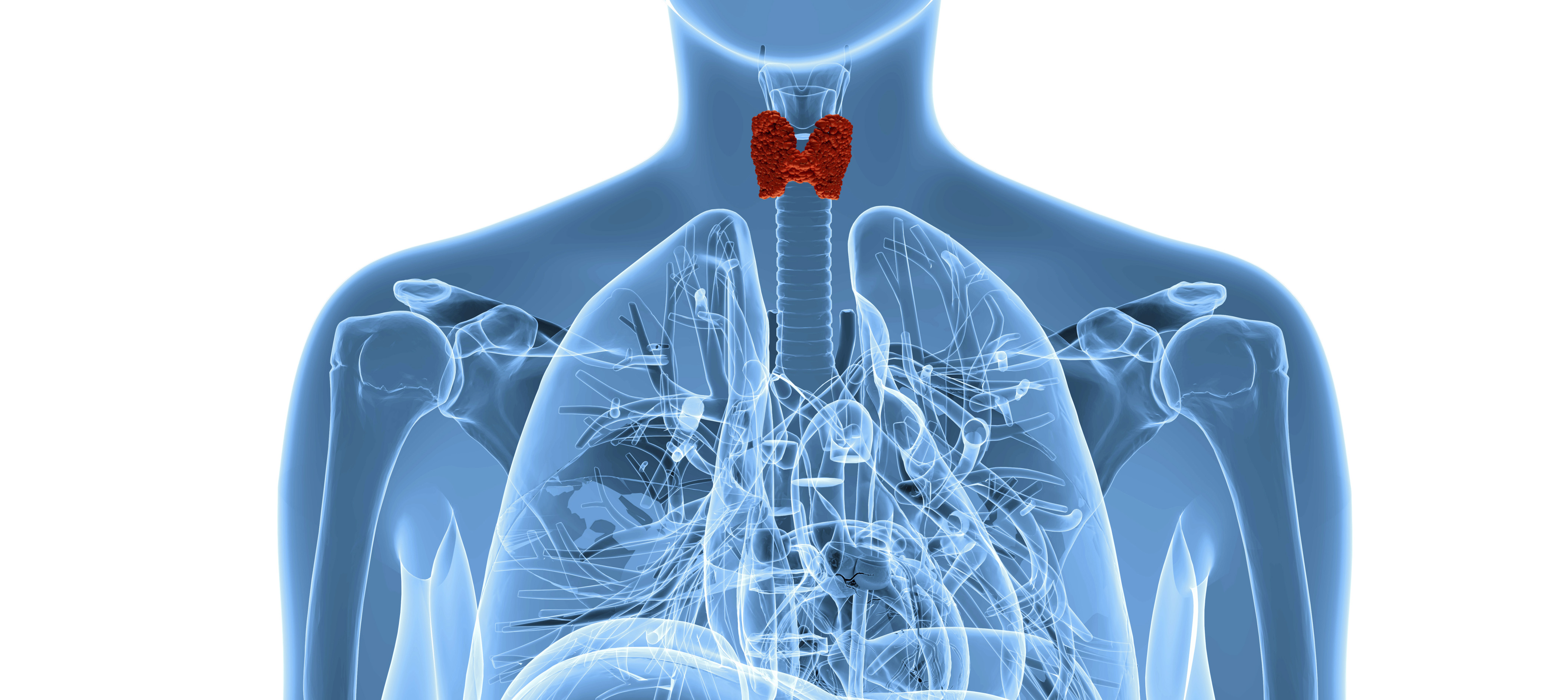 A Duke study finds patients who need their thyroid gland removed should seek surgeons who perform 25 or more thyroidectomies a year for the least risk of complications.
