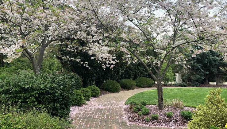 A path through a garden with flowering trees